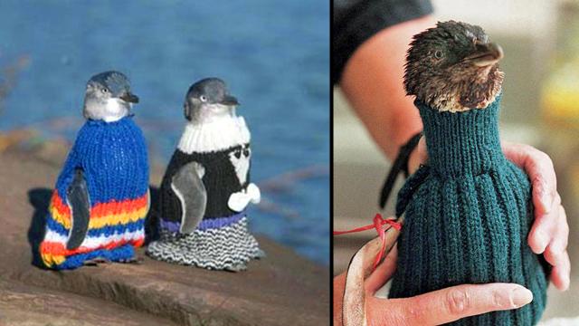 Penquins in sweaters