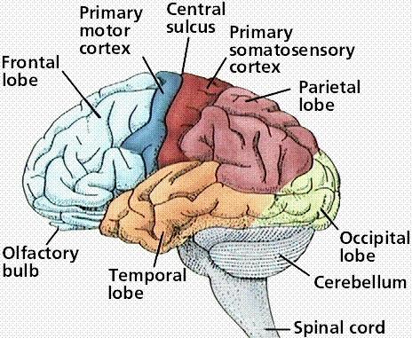 Language on the brain