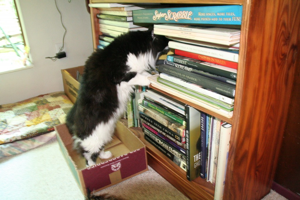 The cat in the bookcase