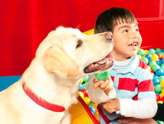 Healer dogs