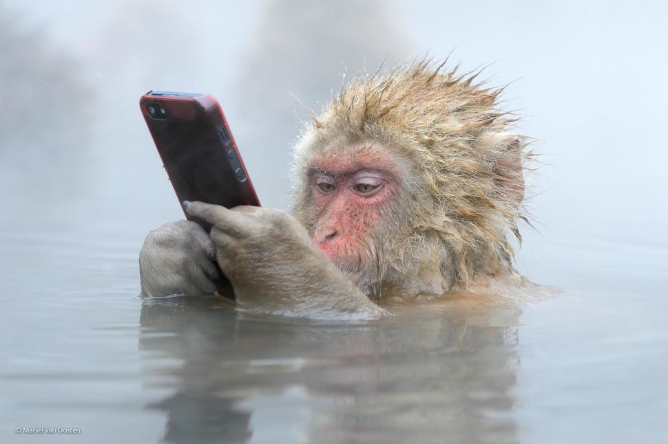 Checking Facebook