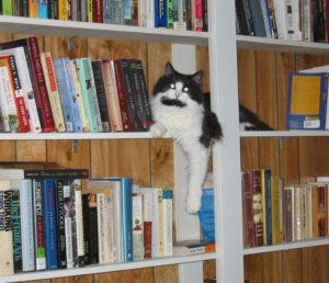 Boboko in the Library
